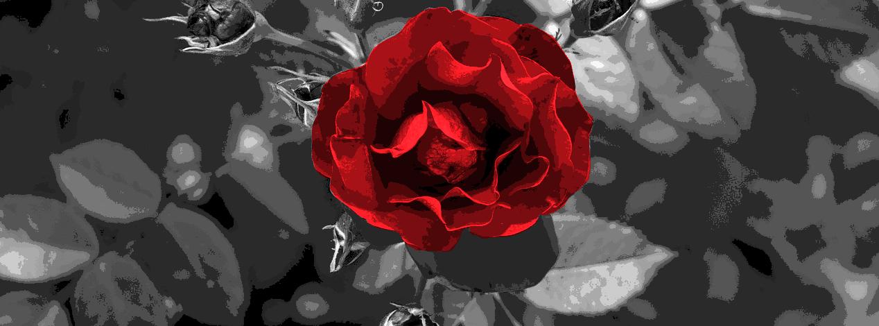 RMR Banner Image